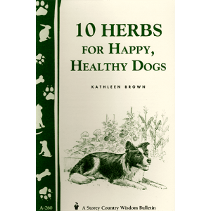 10-herbs-for-dogs049-square