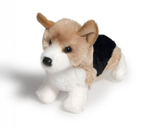 corgi-dogs-in-4-styles-jefferson-pup-shorty-4017